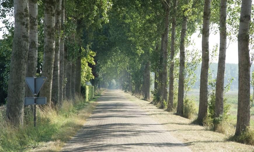 Bestraatte weg met bomen