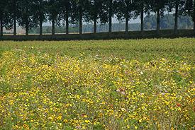 Groene zaken als landschap? Elly Brouwer Agrarisch Advies!