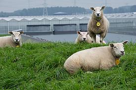 Ruimtelijke ordening vraagstukken? Elly Brouwer Agrarisch Advies adviseert en begeleidt.